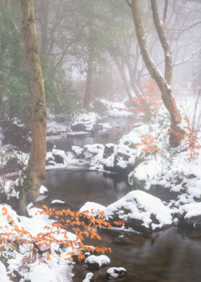 Thackray Beck in snow and mist - Paul Howell